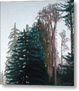 Woods Mist Metal Print by Lucinda  Hansen