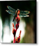 Wornout Dragonfly Metal Print by Susie Weaver