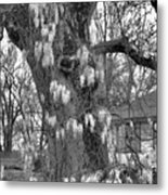 Wysteria Tree In Black And White Metal Print
