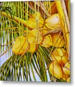 Yellow Coconuts- 01 Metal Print