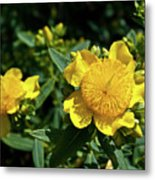 Yellow Crown Flower Metal Print