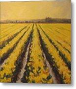 Yellow Daffodil Glow Metal Print
