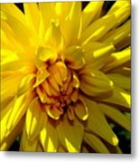 Yellow Daliha Metal Print