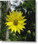 Yellow Flower In Woods Metal Print