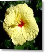 Yellow Hibiscus The Hawaiian State Flower Metal Print