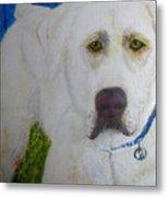 Yellow Labrador Retriever Original Acrylic Painting Metal Print