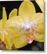Yellow Orchid 2 Metal Print