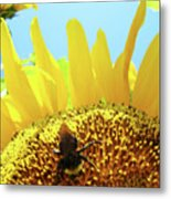 Yellow Sunflower Art Prints Bumble Bee Baslee Troutman Metal Print