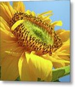Yellow Sunflower Blue Sky Art Prints Baslee Troutman Metal Print