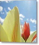 Yellow Tulip Flower Art Prints Spring Blue Sky Clouds Baslee Troutman Metal Print