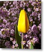 Yellow Tulip In The Garden Metal Print by Garry Gay