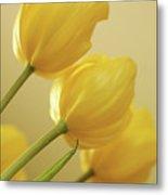 Yellow Tulip Trio Metal Print