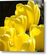 Yellow Tulips Floral Art Prints Nature Garden Metal Print