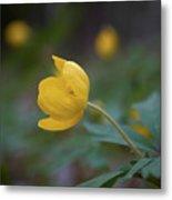 Yellow Wood Anemone 5 Metal Print