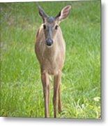 Yes Deer Metal Print