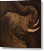 Young Elephant Portrait Metal Print