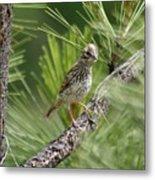 Young Lark Sparrow 3 Metal Print