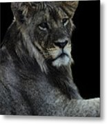 Young Lion Metal Print