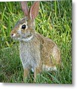 Young Rabbit Metal Print