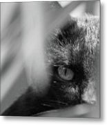 You're Being Watched... Metal Print