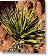 Yucca Five Metal Print