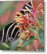 Zebra Butterfly With Blue Eyes Metal Print
