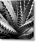 Zebra Cactus Bw Metal Print