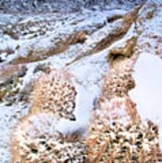 Snow Covered Cactus Below Mount Whitney Eastern Sierras Art Print