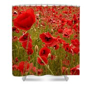 Red Poppies 4 Shower Curtain