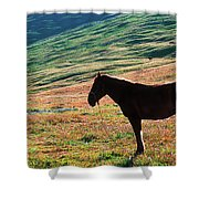 Altay Shower Curtain