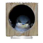 Barn Swallow Chick Shower Curtain by DigiArt Diaries by Vicky B Fuller