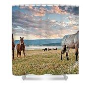 Curious Horses Shower Curtain