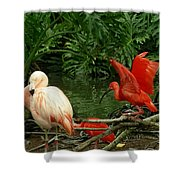 Flamingo And Scarlet Ibis Shower Curtain