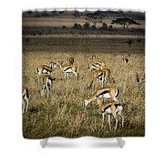 Herd Of Antelope Shower Curtain by Darcy Michaelchuk