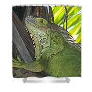 Iguana Puerto Rico Shower Curtain