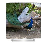 Mr. Sapphire On Alert Shower Curtain