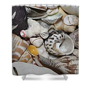 She Sells Seashells Shower Curtain
