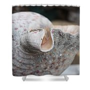 Shell Time Shower Curtain