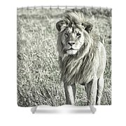 The King Stands Tall Shower Curtain