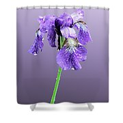Wet Russian Iris Shower Curtain