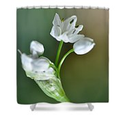 White Blossom 3 Shower Curtain