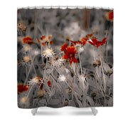 Wildflowers Of The Dunes Shower Curtain by DigiArt Diaries by Vicky B Fuller