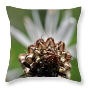 at Lachish 1 Throw Pillow