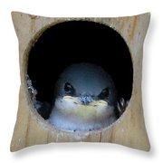 Barn Swallow Chick Throw Pillow by DigiArt Diaries by Vicky B Fuller