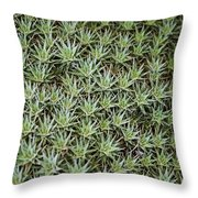 Feild Of Stars  Throw Pillow