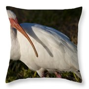 Florida White Ibis  Eudocimus Albus Throw Pillow