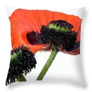 Flower Poppy In Studio Throw Pillow