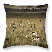Herd Of Antelope Throw Pillow by Darcy Michaelchuk