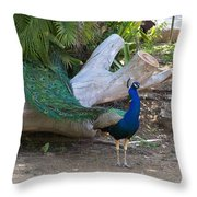 Mr. Sapphire On Alert Throw Pillow