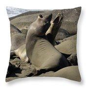 Seal Duet Throw Pillow by Bob Christopher